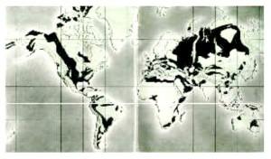 Mapa del mundo con la distribución de petróleo